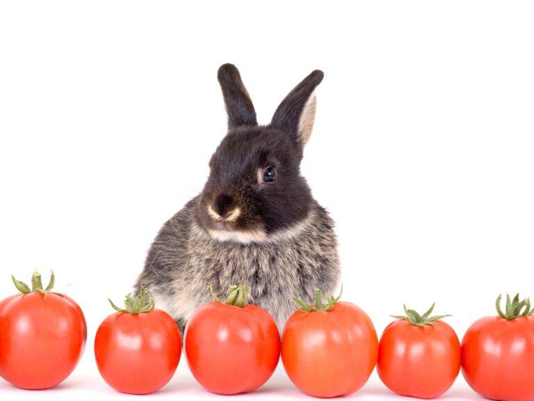 ¿Los conejos pueden comer tomate?