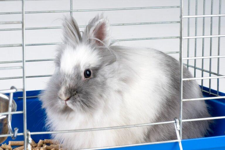 ¿Por qué mi conejo muerde la jaula?