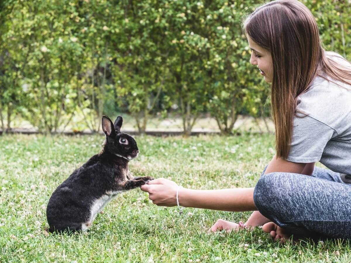 Una niña educando a un conejo.