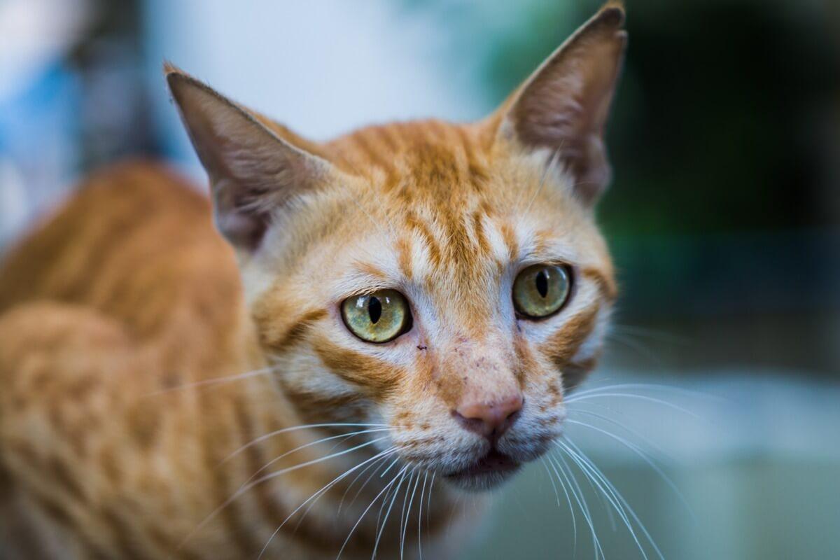 Hay muchos signos que indican que tu gato puede tener cáncer.