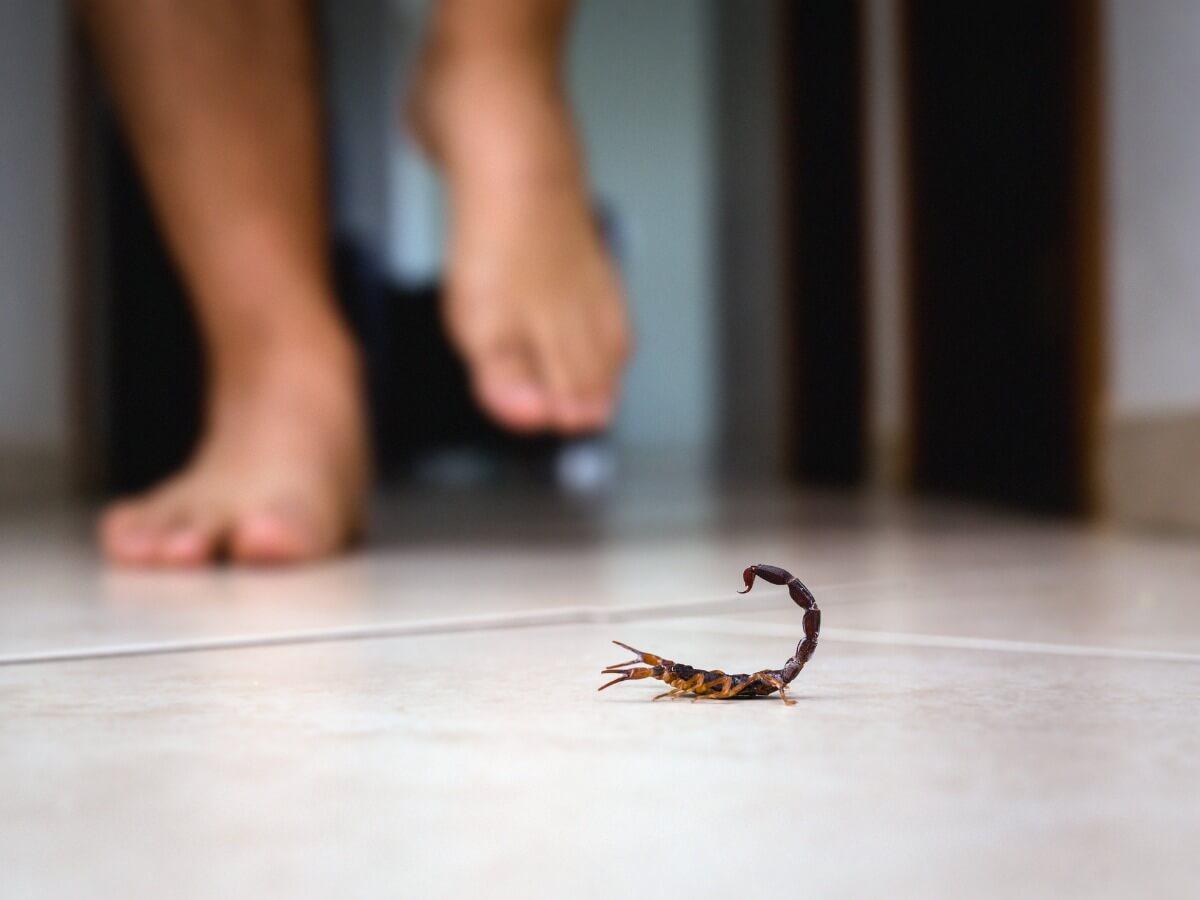 Le Mexique est l'un des pays avec le plus de piqûres de scorpions au monde.