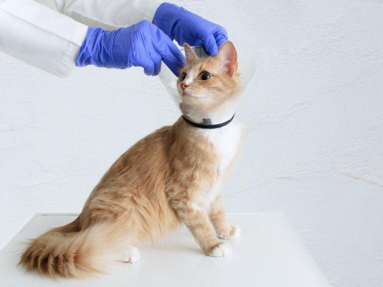 10 signos de que tu gato podría tener cáncer