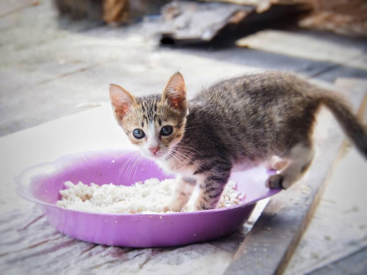 Een kat speelt met een bord rijst