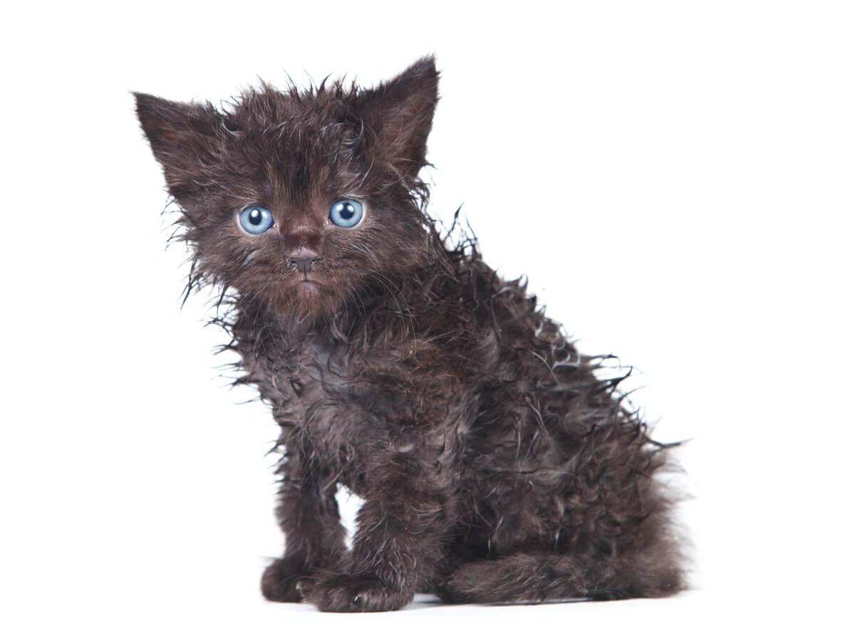 Un gato pequeño sucio.