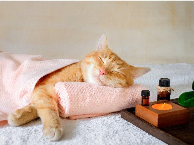 Valeriana para gatos: efectos y dosis