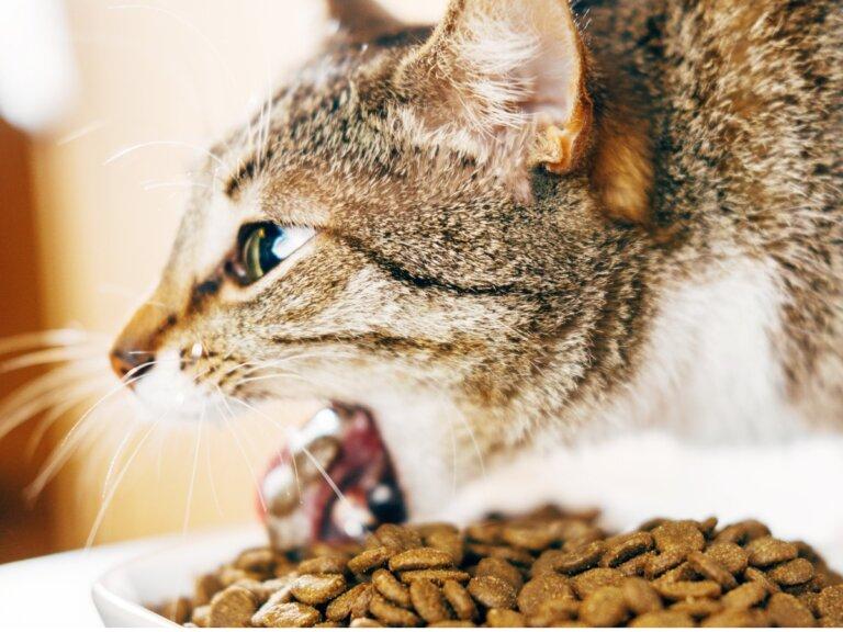 ¿Por qué mi gato vomita después de comer?