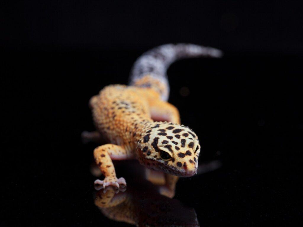 5 reptiles domésticos para tener como mascota
