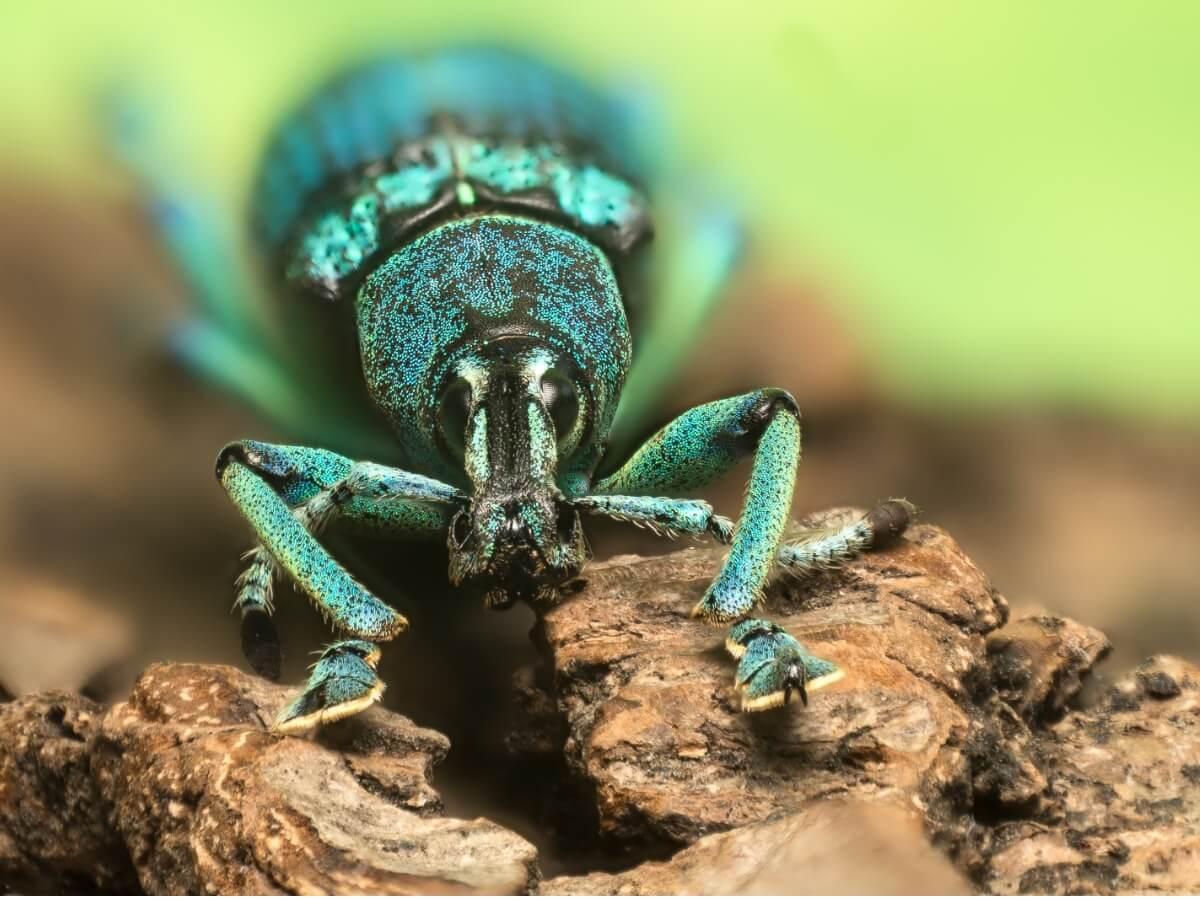 Uno degli insetti più belli.