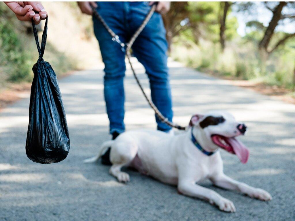 Heces negras en perros: ¿a qué se deben?