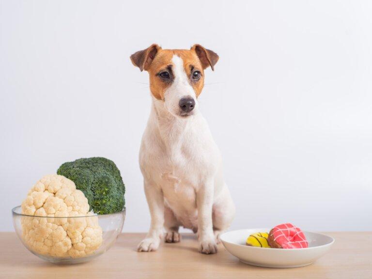 ¿Los perros pueden comer coliflor?