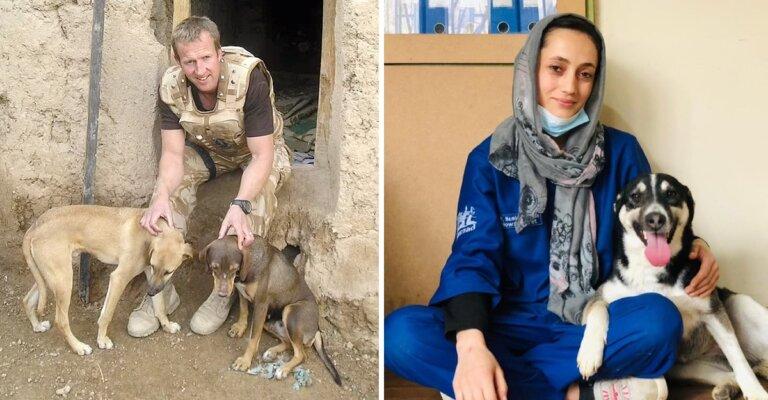 Exmarino podrá evacuar a animales y voluntarios de protectora animal en Afganistán