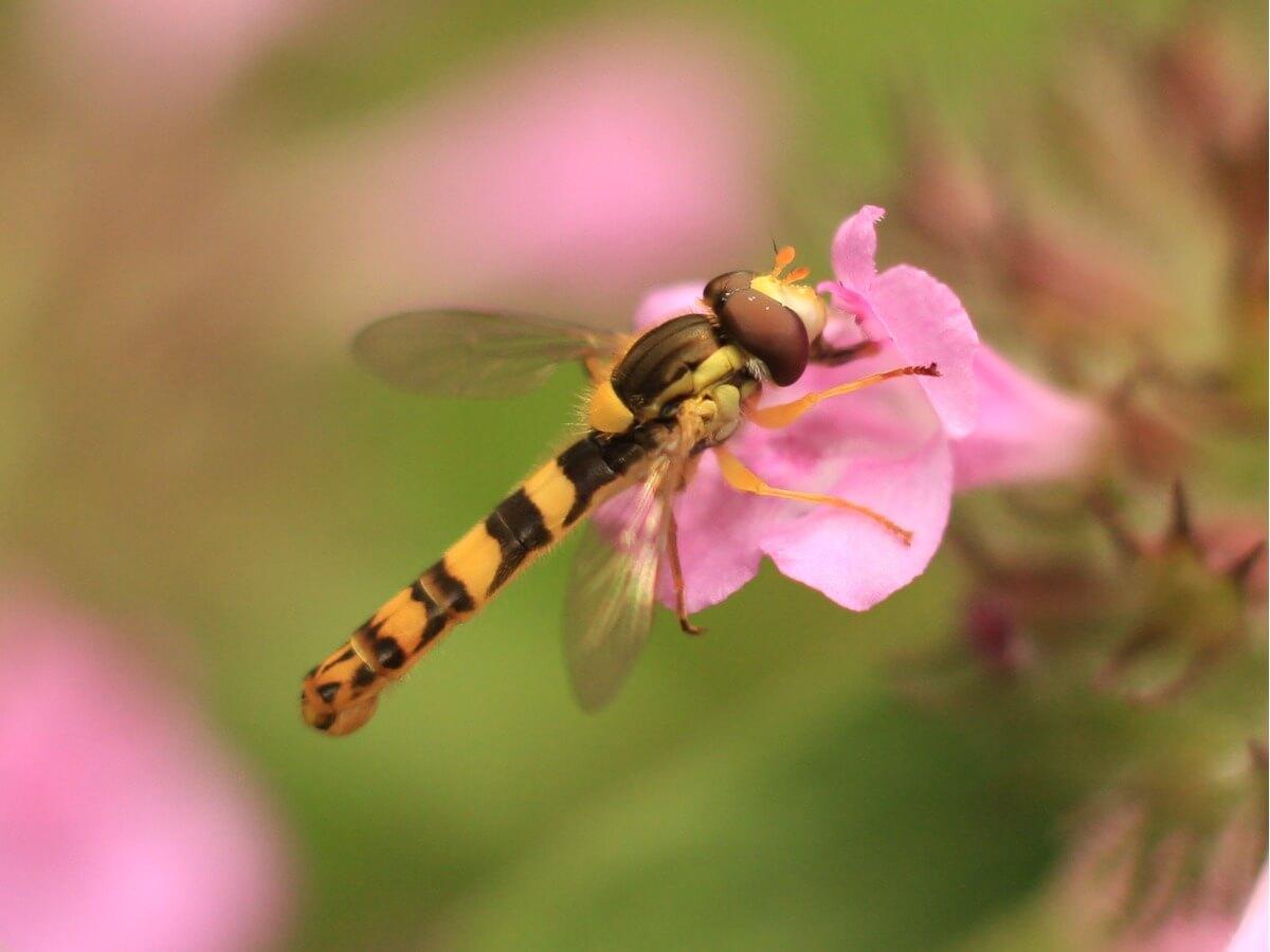 Una lunga libellula su un fiore.