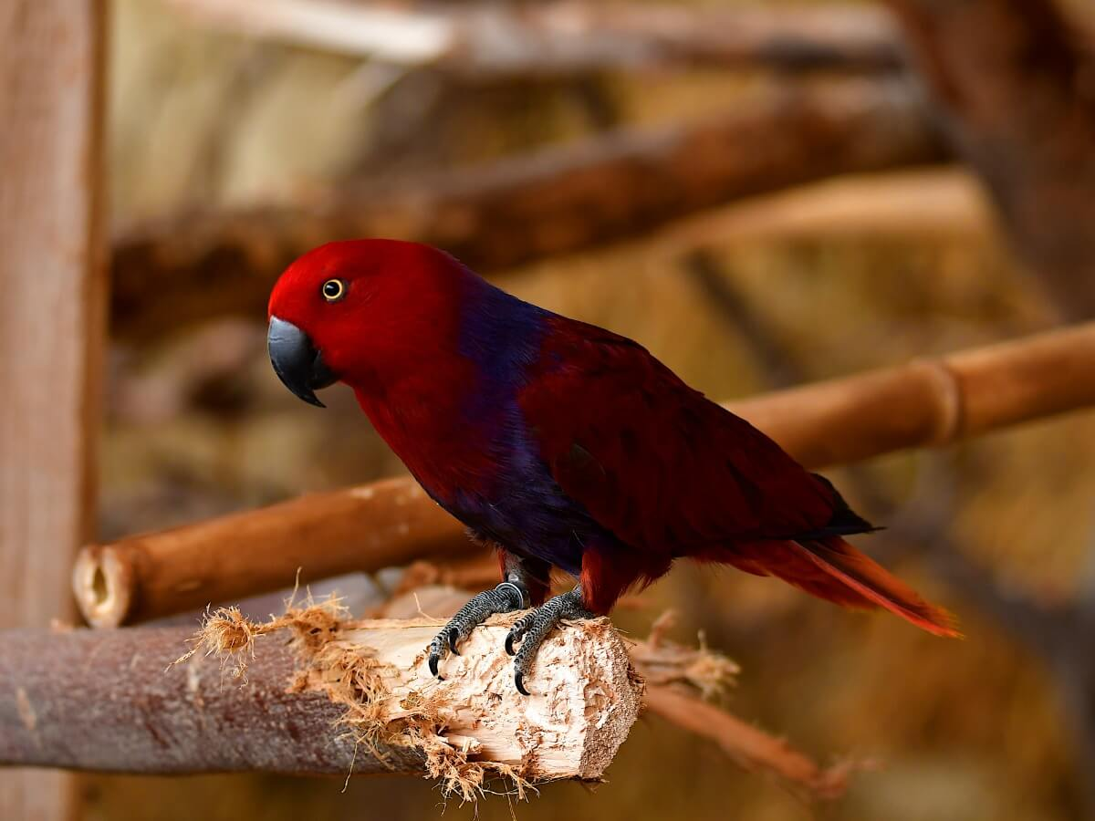 An eclectic parrot on a branch.