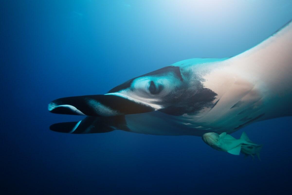 Um dos maiores animais do oceano.