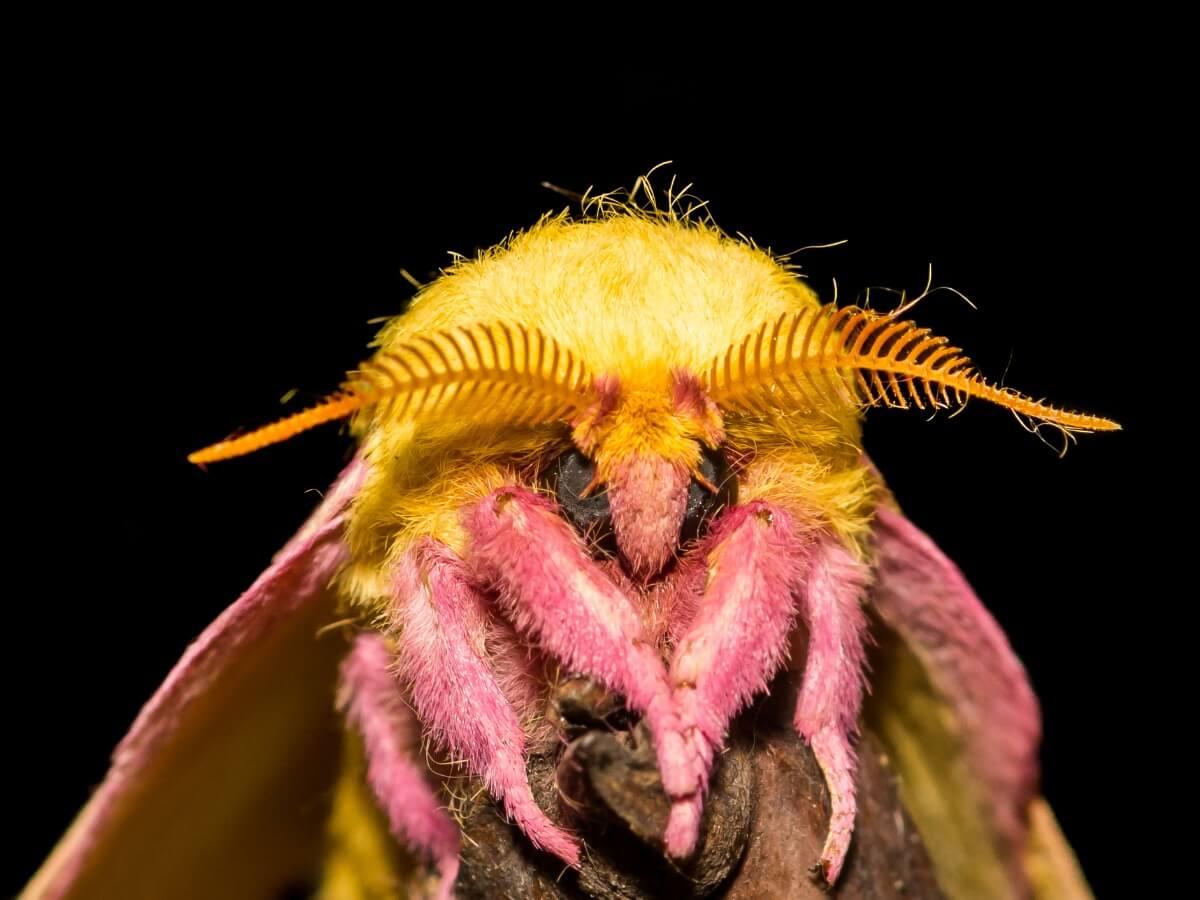 Uno degli insetti più belli del mondo.