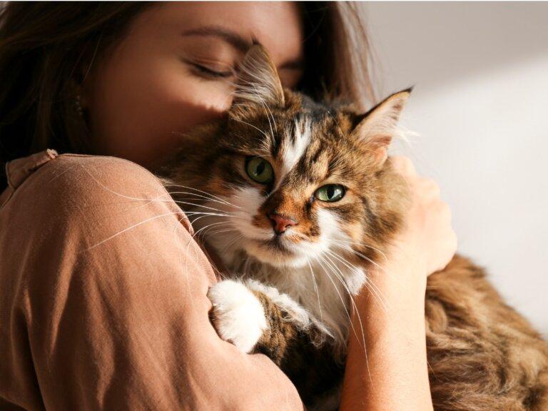 ¿Los gatos son celosos?