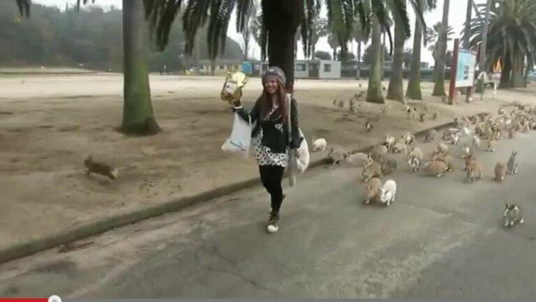 Miles de conejos siguen a una joven con comida