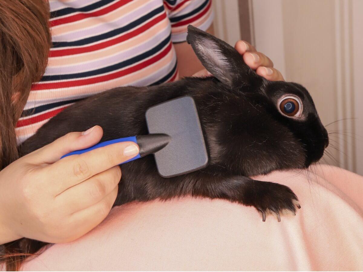 Una tutora peina a su mascota.