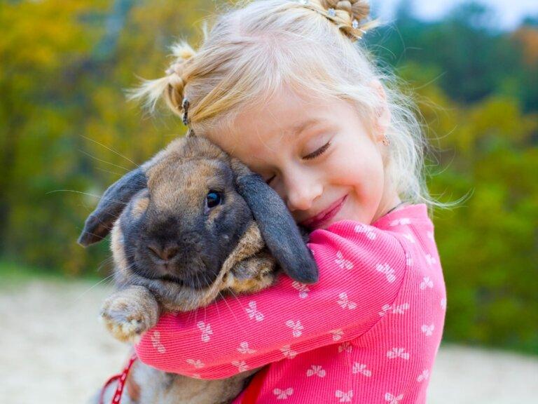 ¿Cómo educar a un conejo? 8 consejos