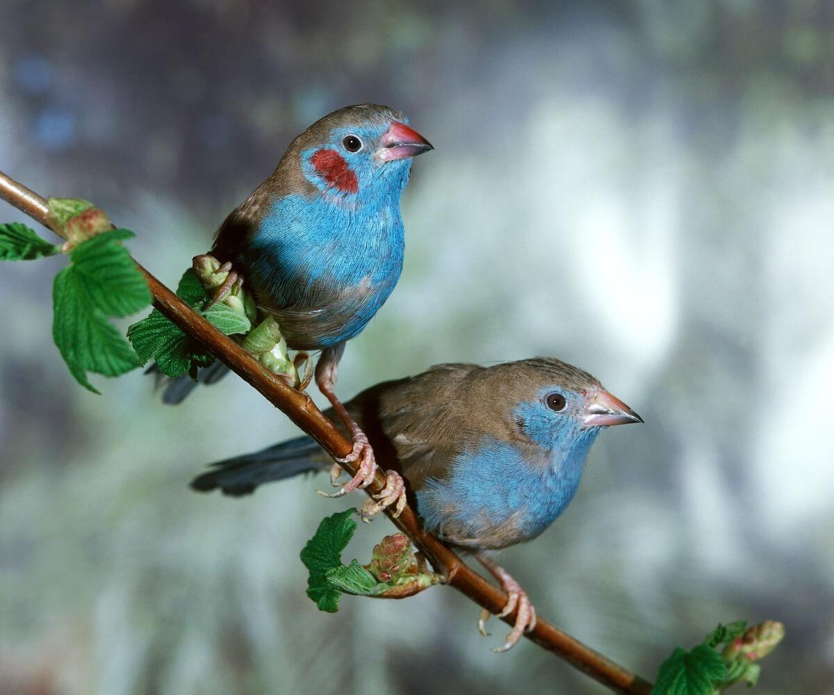 Uno de los pájaros tropicales más pequeños del mundo.