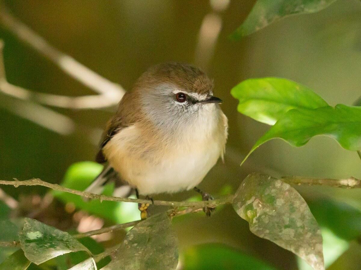 Un pájaro muy pequeño.