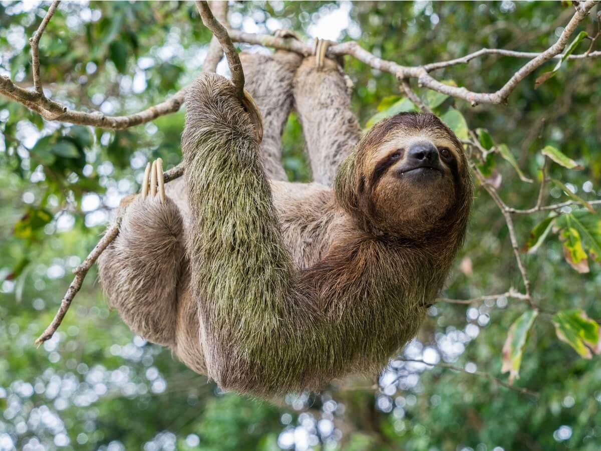 Uno degli animali più pericolosi in Asia.