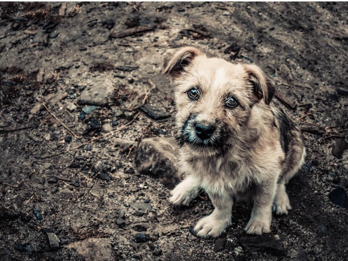 Un perro abandonado en el barro.