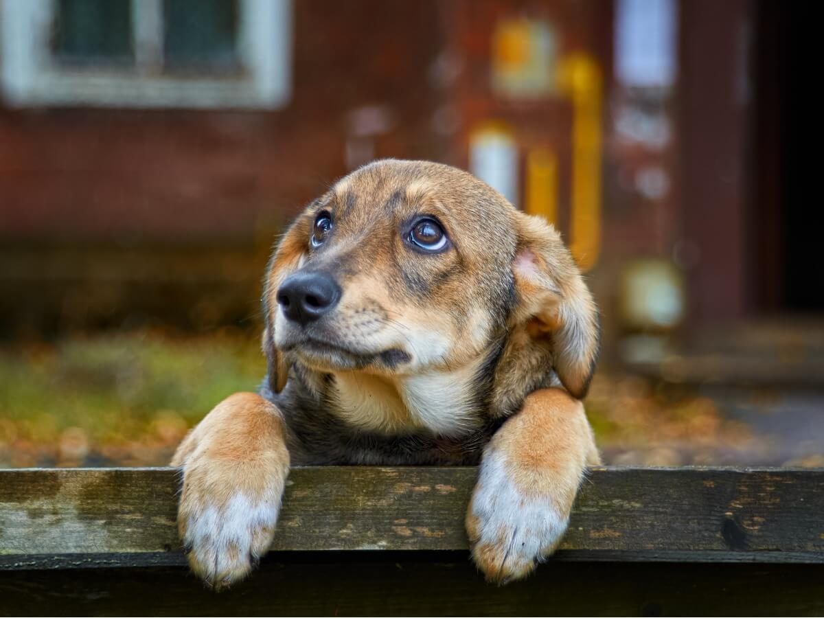70 % des chiens vivent abandonnés.