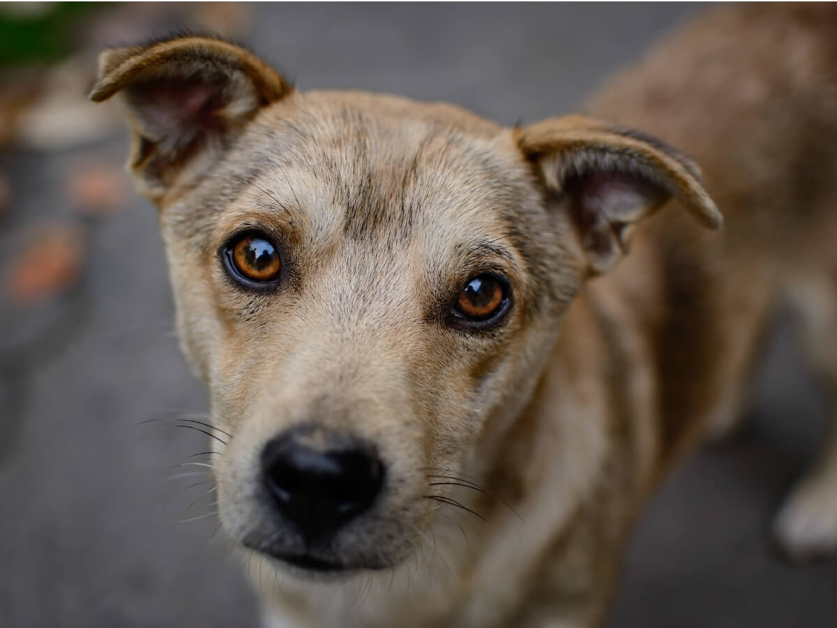 Les données sur l'abandon des chiens sont dévastatrices.