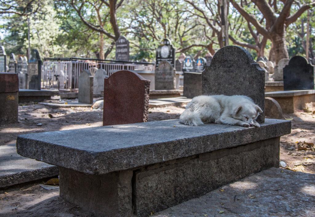 ¿Los perros pueden predecir la muerte?