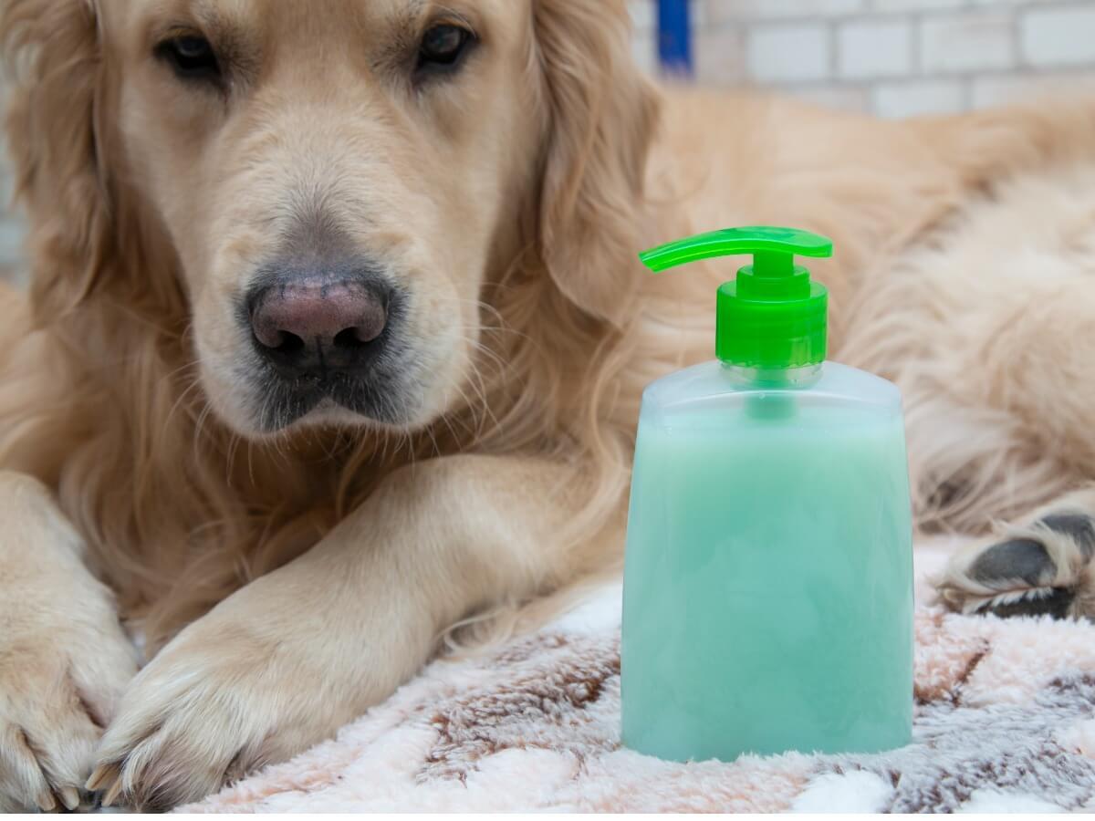 Cosa devo fare se il mio cane mangia il sapone?