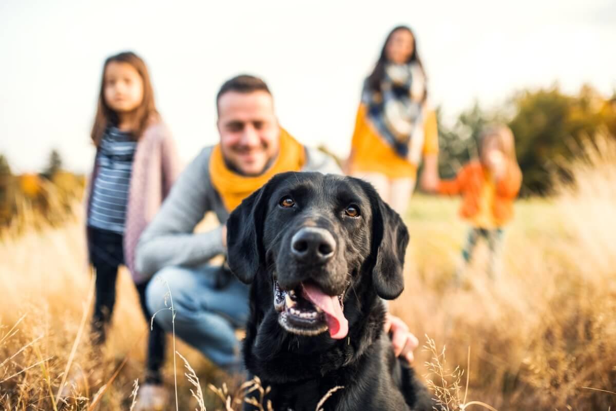 Un perro disfrutando con su familia.