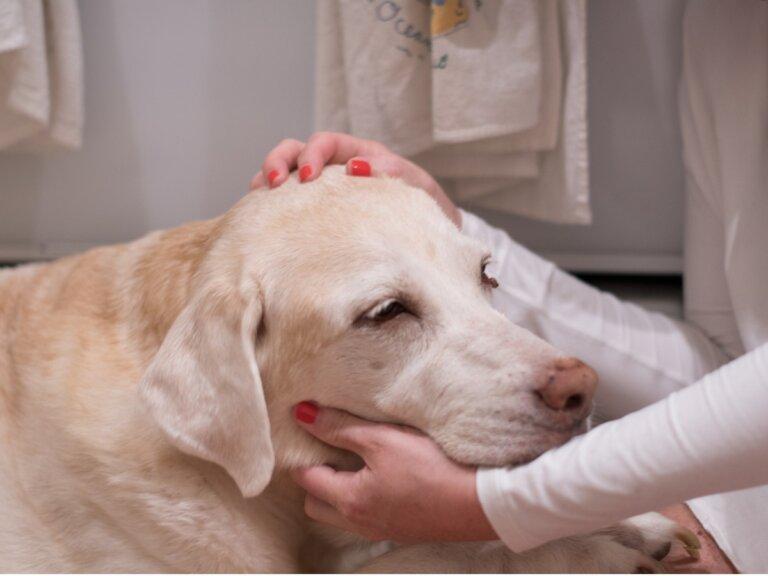 12 señales de que tu perro podría tener cáncer