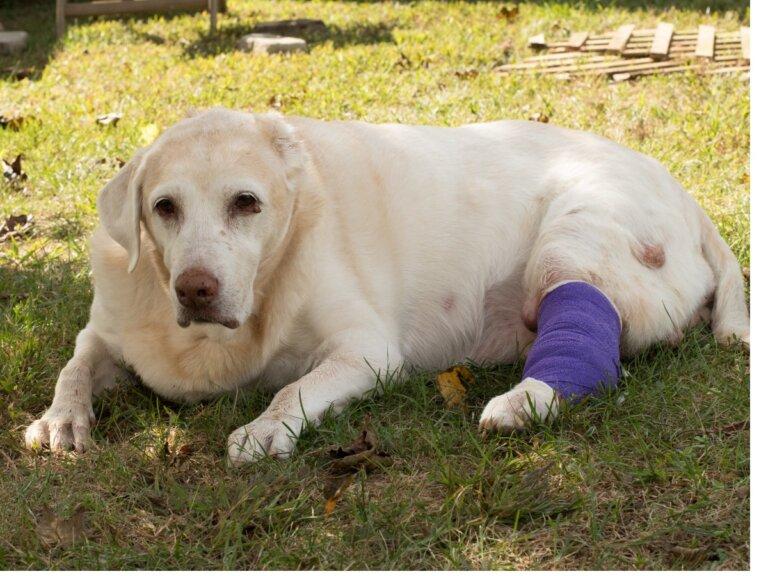 Los 7 tipos de cáncer más comunes en perros