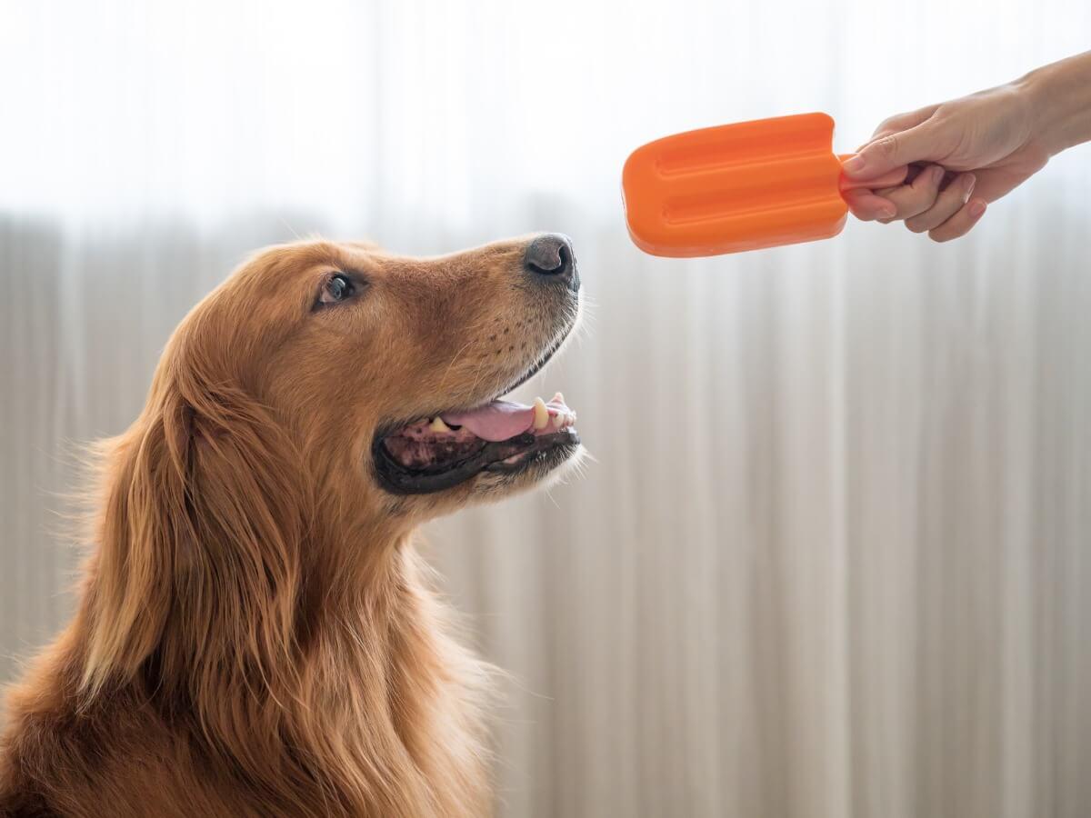 Un perro comiendo helado.