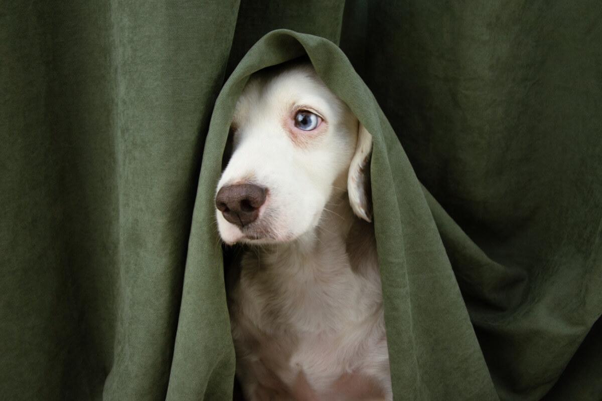Mi perro se esconde de mí y está raro: ¿qué debo hacer?