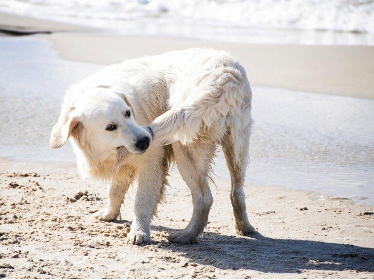 ¿Por qué los perros se muerden la cola?