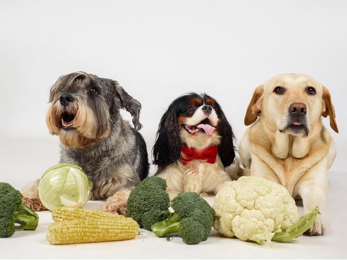 Un grupo de perros con verduras.