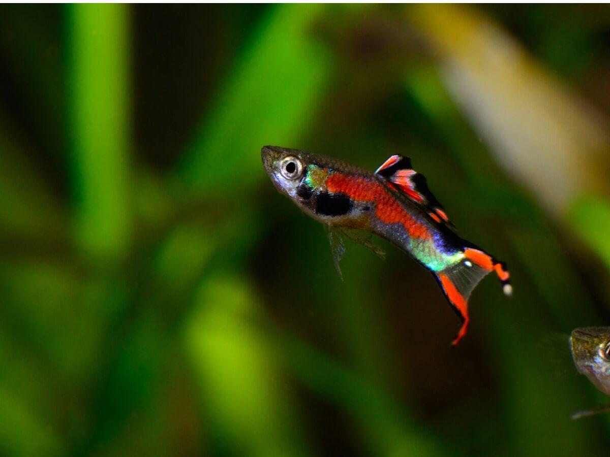 Un animal de acuario.