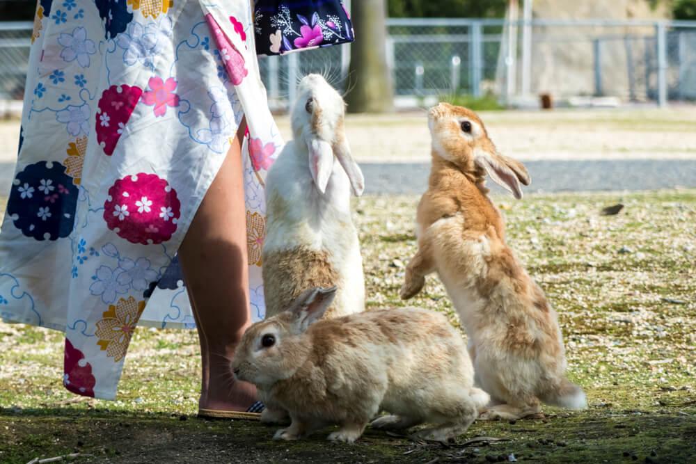 Conejos en las calles.