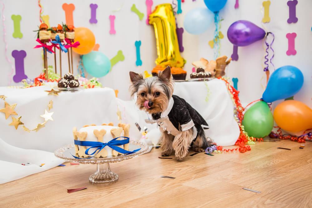 Perro celebrando un cumpleaños.