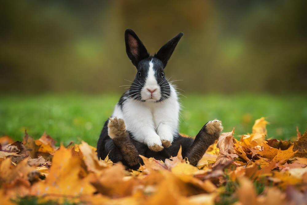 Conejo en el pasto.