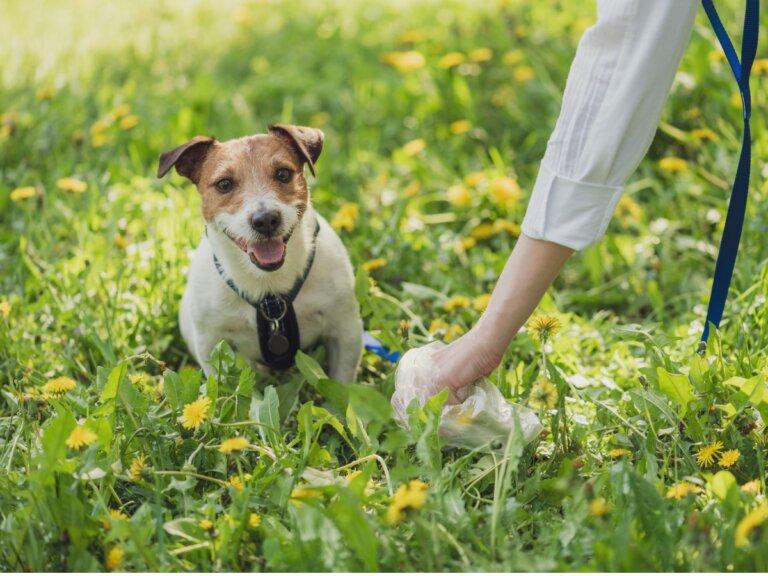 Tipos de heces en perros y lo que dicen de su salud