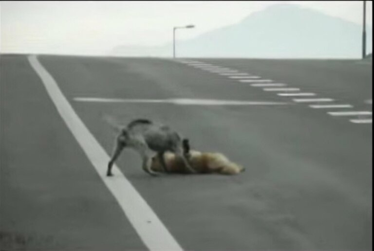 Rescata a su amigo de la carretera