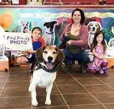 Niño adopta a perro Beagle.
