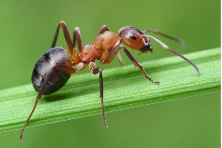 Ácaros en el hormiguero: ¿cómo deshacerse de ellos?