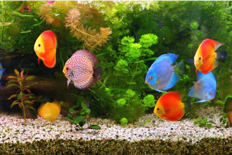 10 dudas frecuentes sobre el acuario
