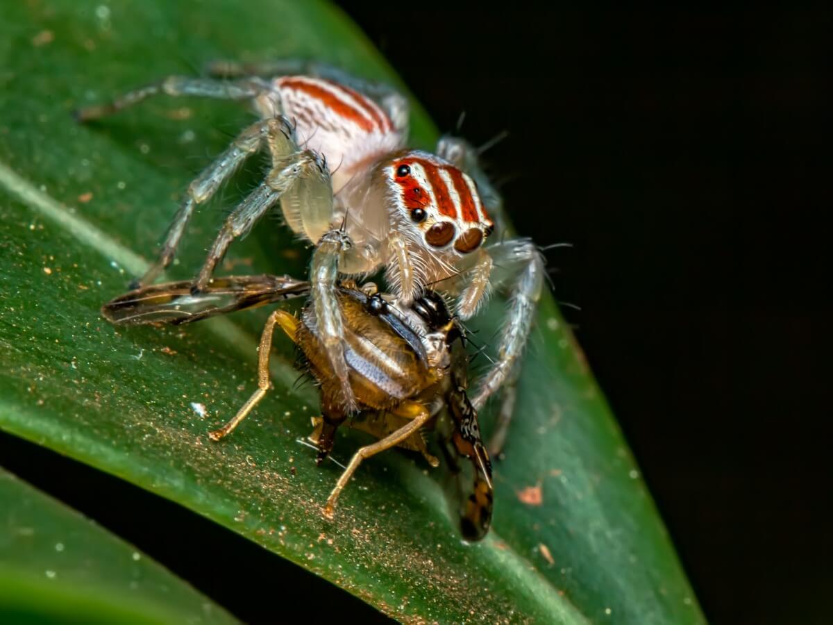 ¿Qué comen las arañas?