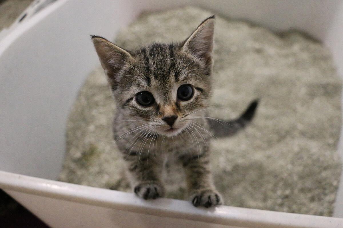 ¿Cada cuánto se debe cambiar la arena del gato?