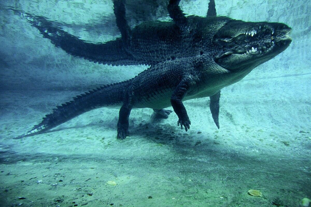 Uno de los animales más peligrosos del mar.
